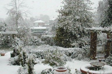 How to save your gardens during snow strikes